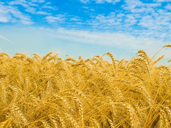 Сельхозпредприятия Крыма
